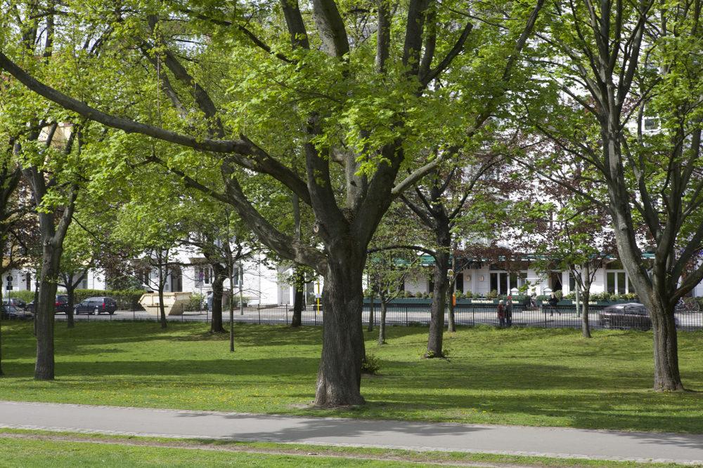 Volkspark Friedrichshain - Restaurant Qadmous - Aussicht vom Park Baum - Weg